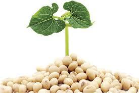 Bí quyết tăng kích thước vòng 1 từ mầm đậu nành Thanh Mộc Hương